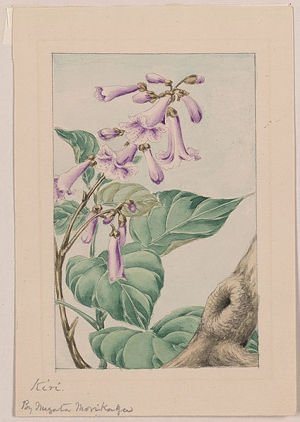 Japanese picture of paulownia.